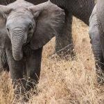 Des sites naturels à retenir lors d'un séjour en Tanzanie