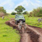 5 destinations pour le parfait safari africain
