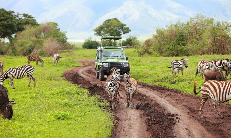 Les 5 Destinations Pour Faire Un Safari En Afrique