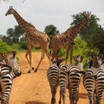 Parfaire un écotourisme dans le parc national de Serengeti en Tanzanie